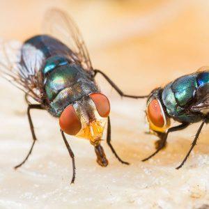 cara-membasmi-lalat