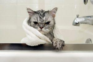 rendaman-air-garam-untuk-basmi-kutu-kucing