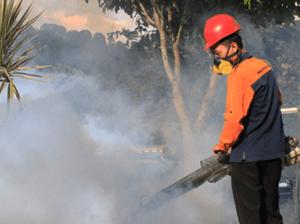 jasa-fogging-afor